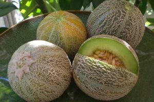Melon Eden's Gem