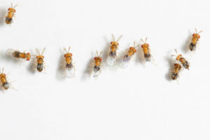 Pest Control - Trichogramma Gard