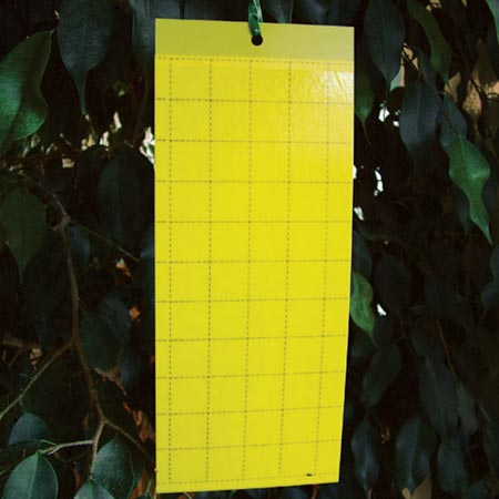 Pest Control - Yellow Sticky Traps