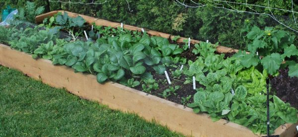 "Raised Bed Garden - Hemlock 2""x8"" planks"