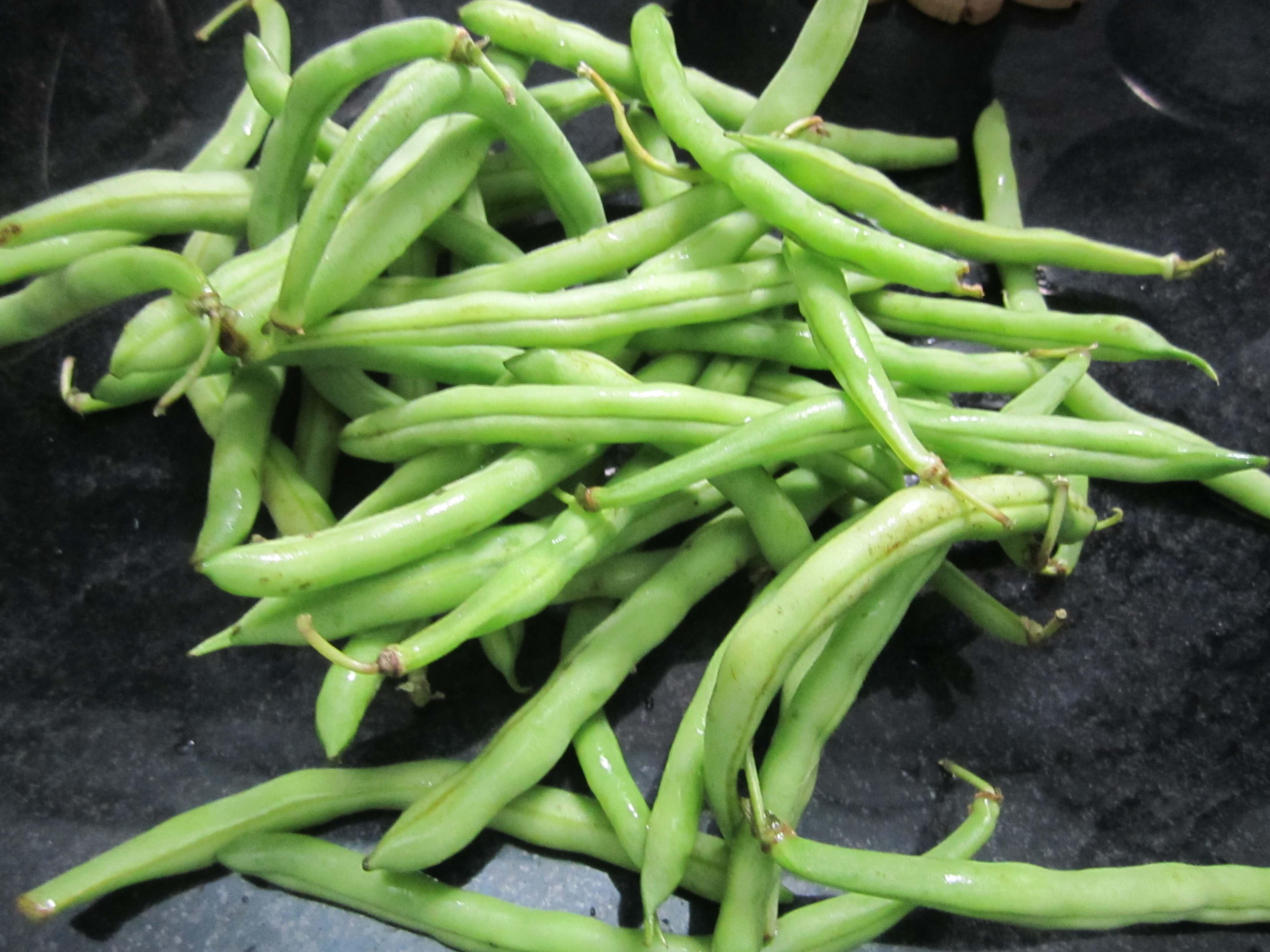 Bean Provider Green Bush Urban Seedling