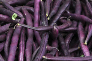 Bean - Royal Burgundy Bush
