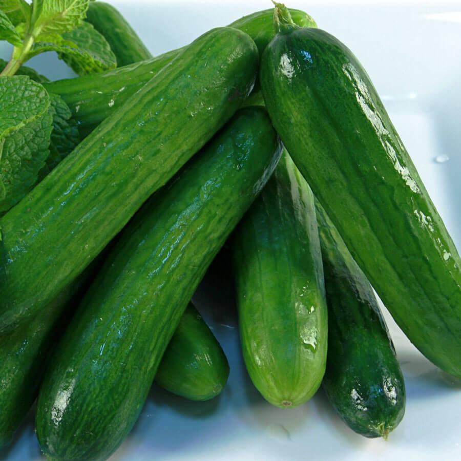 Cucumber – Super Zagross – Urban Seedling