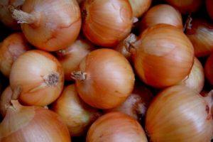 vegetables-onion-early-globe.jpg