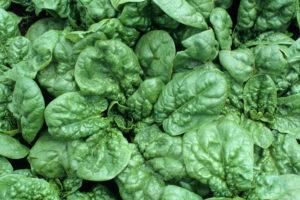 vegetables-spinach-bloomsdale.jpg