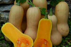 vegetables-squash-butternut.jpg