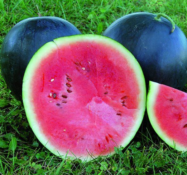 Watermelon Blacktail Mountain