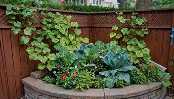 horticultural-design-4
