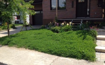 Organic clover lawn