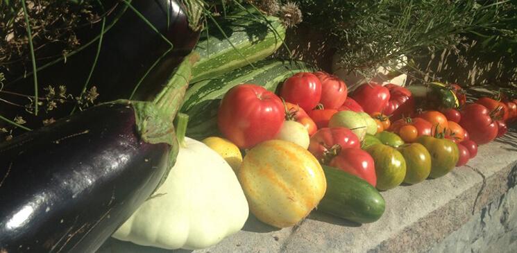 Legumes frais biologique