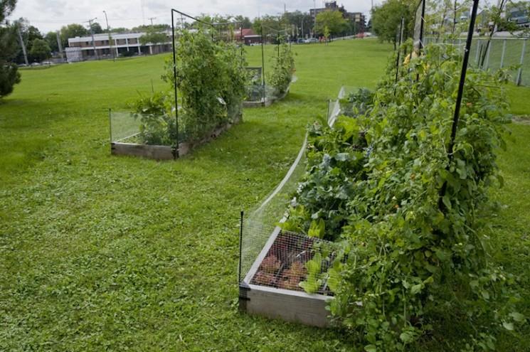 Schoolyard Garden