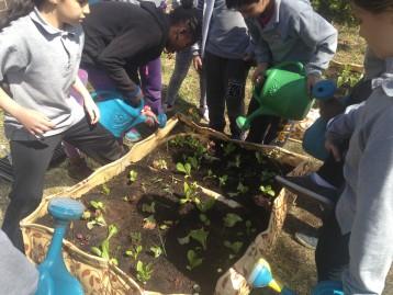 Educational Vegetable Garden