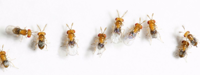 insects-1
