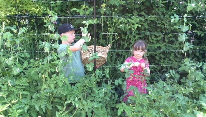 Récolte d'été