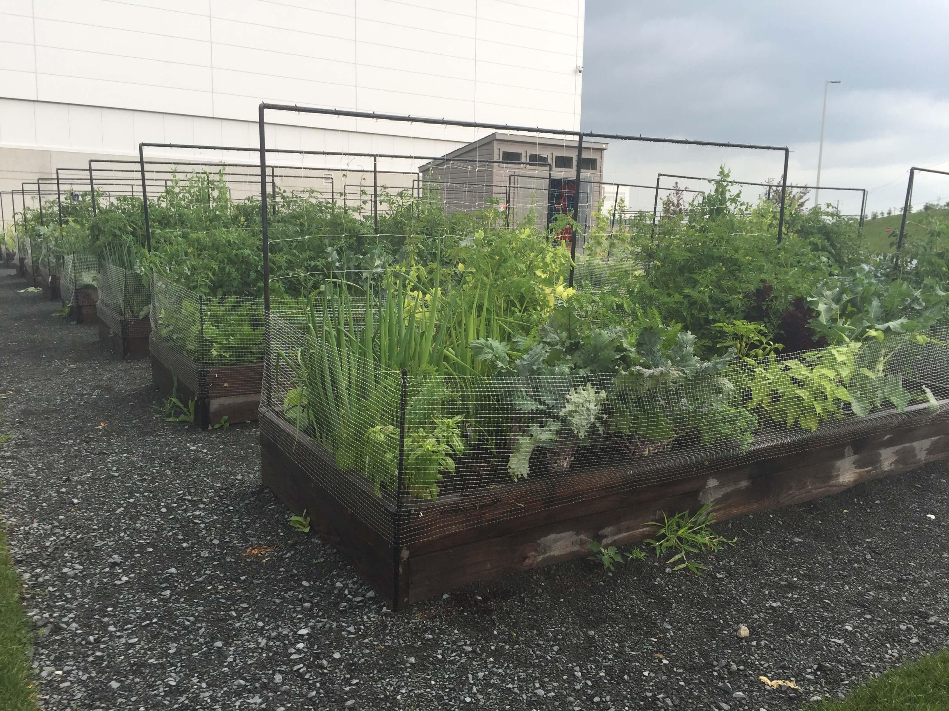 Community Vegetable Gardens Urban Seedling
