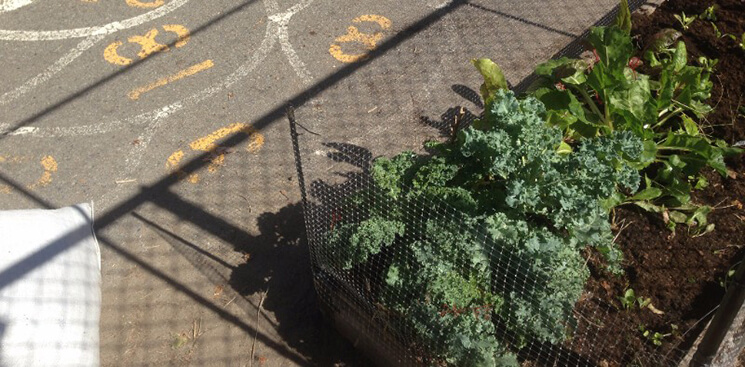 Kale Fall Garden