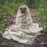 Stay safe pug bundled up