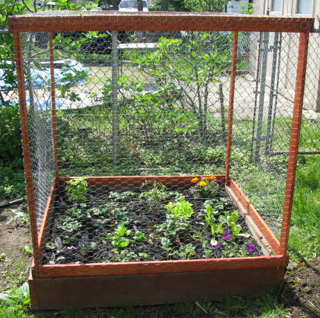 Vegetable gardening newsletter 6 urban seedling for Garden cage