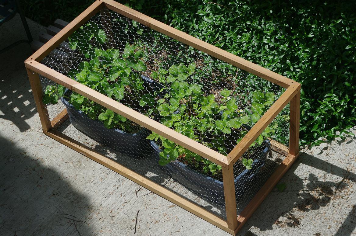 Vegetable Gardening Newsletter #6 - Urban Seedling