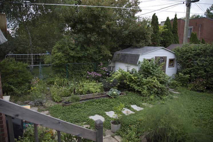 alternatives la pelouse une pelouse cologique semis urbains. Black Bedroom Furniture Sets. Home Design Ideas