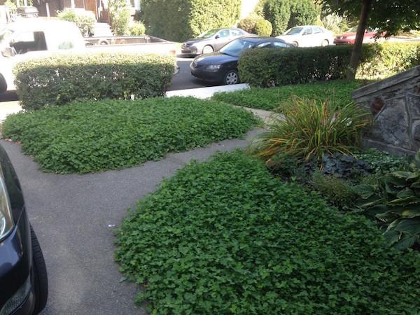 alternatives à la pelouse : une pelouse écologique – semis urbains