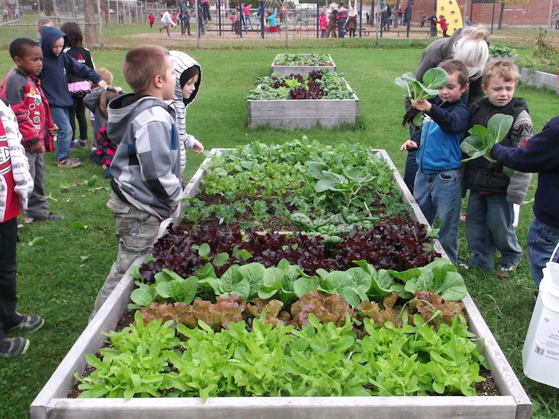 school vegetable gardens